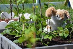B. Rabbit in Garden (1)